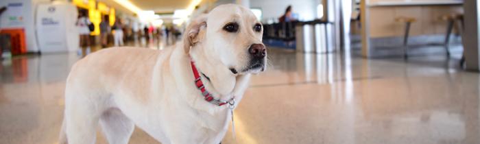 FAQ-Assistance-dog.jpg